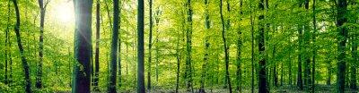 Quadro Beech panorama paisagem florestal