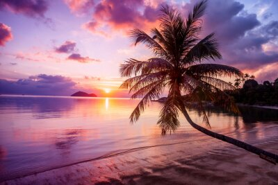 Quadro Bonito, luminoso, pôr do sol, tropicais, paraisos, praia