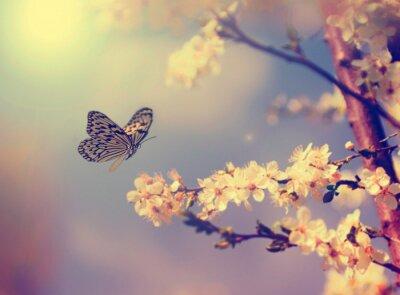 Quadro Borboleta e flor de cerejeira
