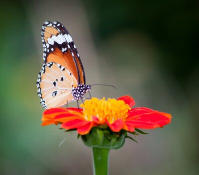 Quadro Borboleta em uma flor