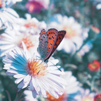 Quadro Borboleta na flor