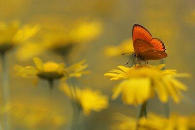 Quadro borboleta no jardim