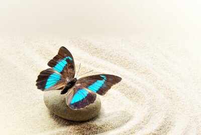 Quadro Borboleta Prepona Laerte na areia