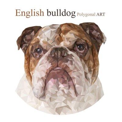 Quadro Bulldog inglês. Desenho poligonal ..