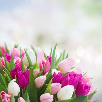 Quadro Buquê de tulipas rosa, roxo e branco