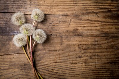 Quadro Buquet, branca, dandelions, madeira, tabela