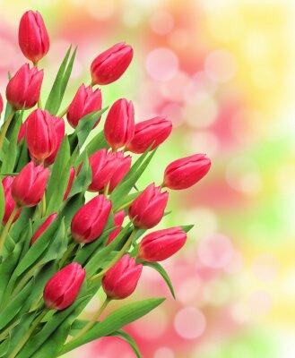 Quadro Buquet, Cor-de-rosa, tulips, luminoso, natureza, fundo