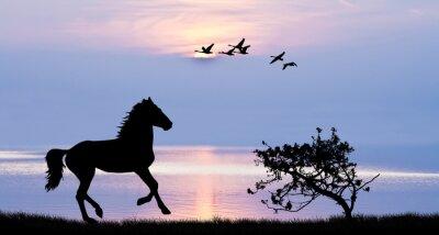 Quadro Caballo correndo por el lago