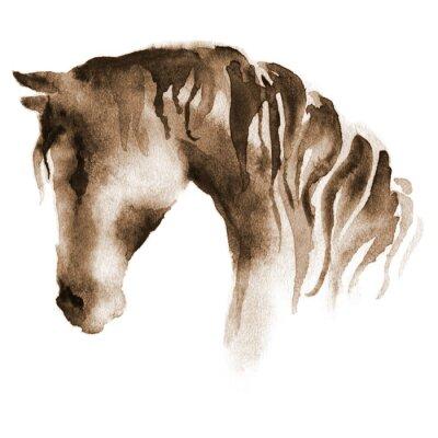 Quadro Cabeça de cavalo molhado da aguarela. Mão pintado cavalo marrom no branco.