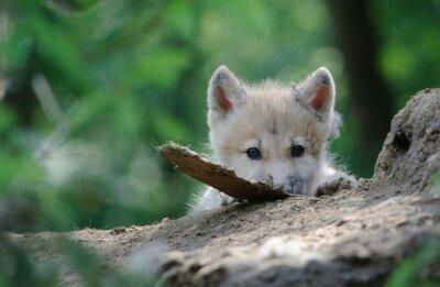 Quadro caçadores de lobos