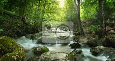 Quadro cachoeira da floresta