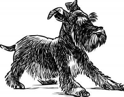 Quadro Cachorro schnauzer