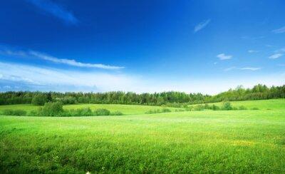 Quadro campo de grama e céu perfeito