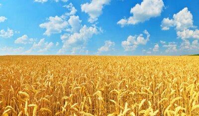 Quadro Campo de trigo