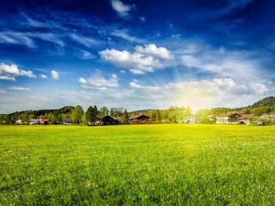 Quadro Campo prado campo com sol e céu azul