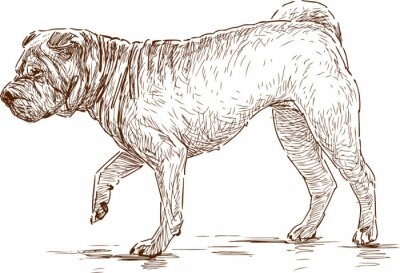 Quadro cão em uma caminhada