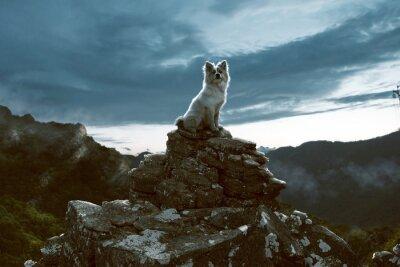 Quadro Cão, senta-se, rocha, montanhas