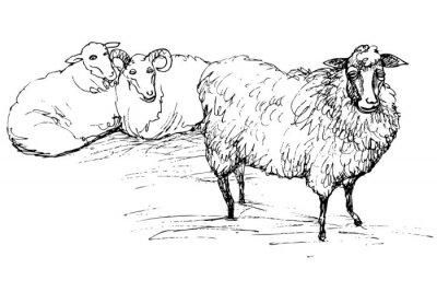 Quadro Carneiro e ovelha
