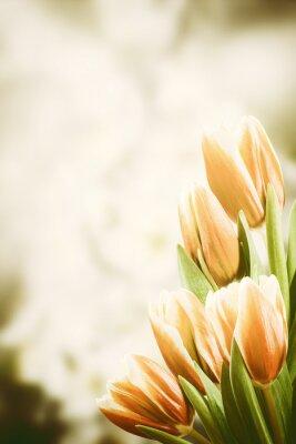 Quadro Cartão do vintage com flores da tulipa