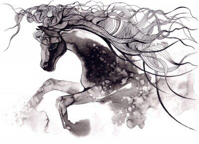 Quadro cavalo