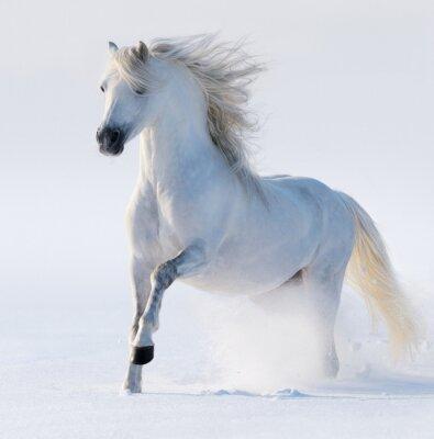 Quadro Cavalo de galope branca de neve