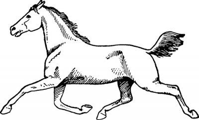 Quadro Cavalo do desenho do vintage
