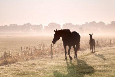 Quadro Cavalo e potro silhuetas em nevoeiro