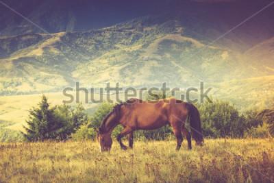 Quadro Cavalos está pastando contra montanhas. Paisagem de outono Imagem filtrada: Cruz processado efeito vintage.
