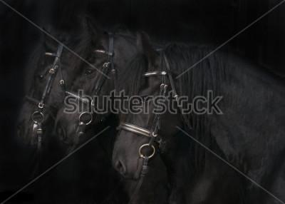 Quadro Cavalos Friesian