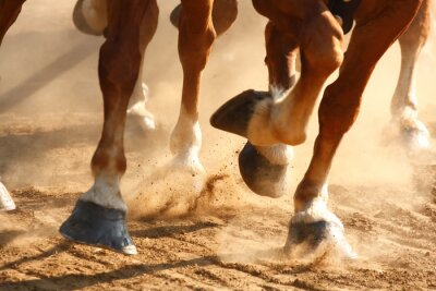 Quadro Cavalos Running Cavalos