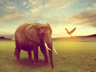 Quadro Cenário, incluindo um elefante africa