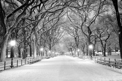 Quadro Central Park, Nova Iorque coberta de neve ao amanhecer