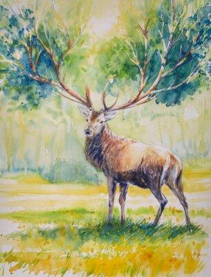 Quadro Cervos de Summer.Red com os chifres grandes em cujo crescem leaves.Picture criado com watercolours.