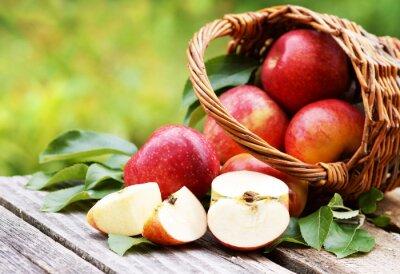 Quadro Cesta com maçãs frescas