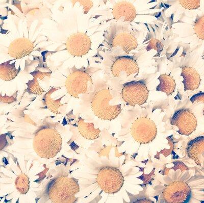 Quadro chamomiles flores - estilo do vintage