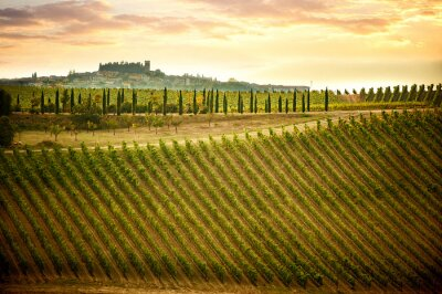 Quadro Chianti colinas com vinhas e ciprestes. Paisagem Toscana entre Siena e Florença. Itália