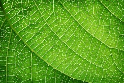 Quadro Close up de uma folha verde