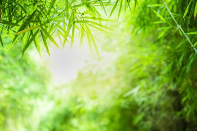 Quadro Closeup beautiful view of nature green bamboo leaf on greenery blurred background with sunlight and copy space. It is use for natural ecology summer background and fresh wallpaper concept.