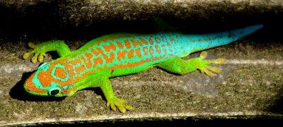Quadro Colorful turquesa gecko verde
