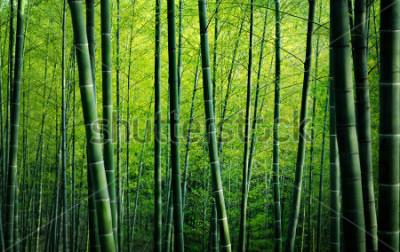 Quadro Conceito de natureza de árvores de floresta de bambu