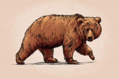 Quadro Cor gravar isolado grizzly urso