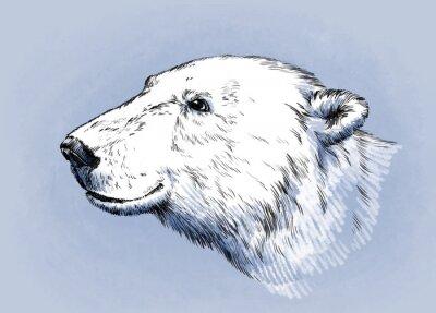Quadro Cor gravar vetor isolado urso