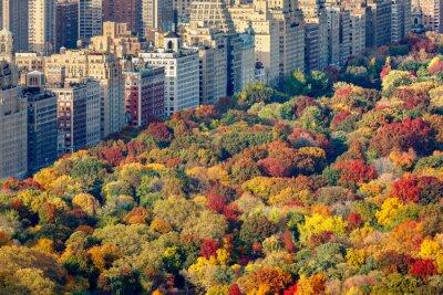 Quadro Cores brilhantes da queda do Central Park folhagem no final da tarde. Vista aérea em direção ao Central Park West. Upper West Side, Manhattan, New York City