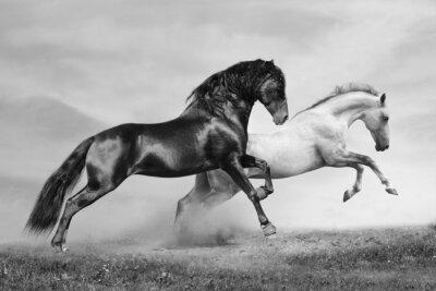Quadro correrão cavalos