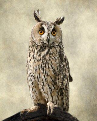 Quadro Coruja orelhuda longa, texturas adicionadas para trazer para fora a beleza da coruja.