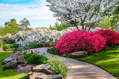 Quadro Curvo caminho através de bancos de Azeleas e sob dogwood árvores com tulipas sob um céu azul - beleza na natureza