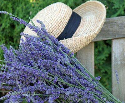 Quadro Cut lavanda fresca com Garden Hat