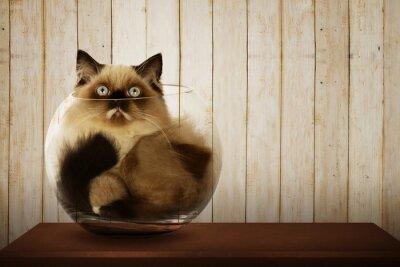 Quadro Cute persian cat inside glass bowl