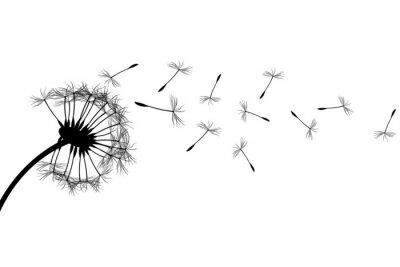 Quadro Dandelion silhueta