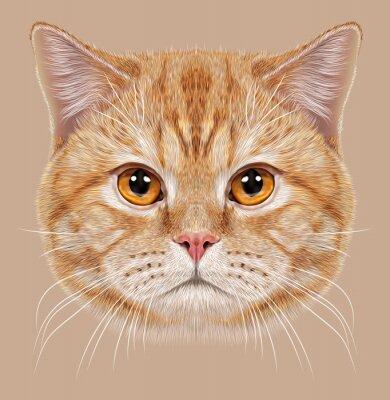 Quadro De Ilustração - retrato, britânico, shortinho, cabelo, gato.